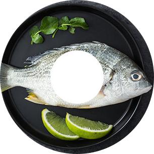 Línea de comida de pescado